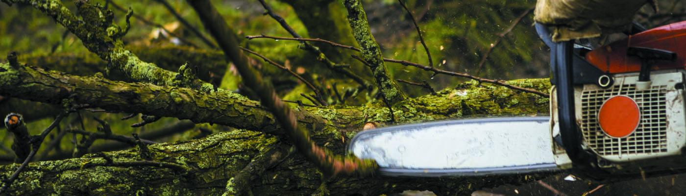 Puude hoolduslõikus Pärnus