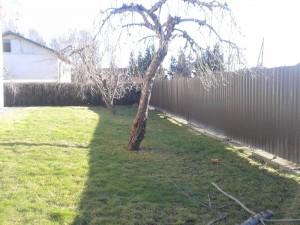 Viljapuude hoolduslõikus-2