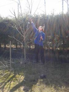 Viljapuude hoolduslõikus
