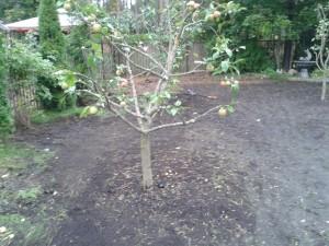 Puude ümberistutamine